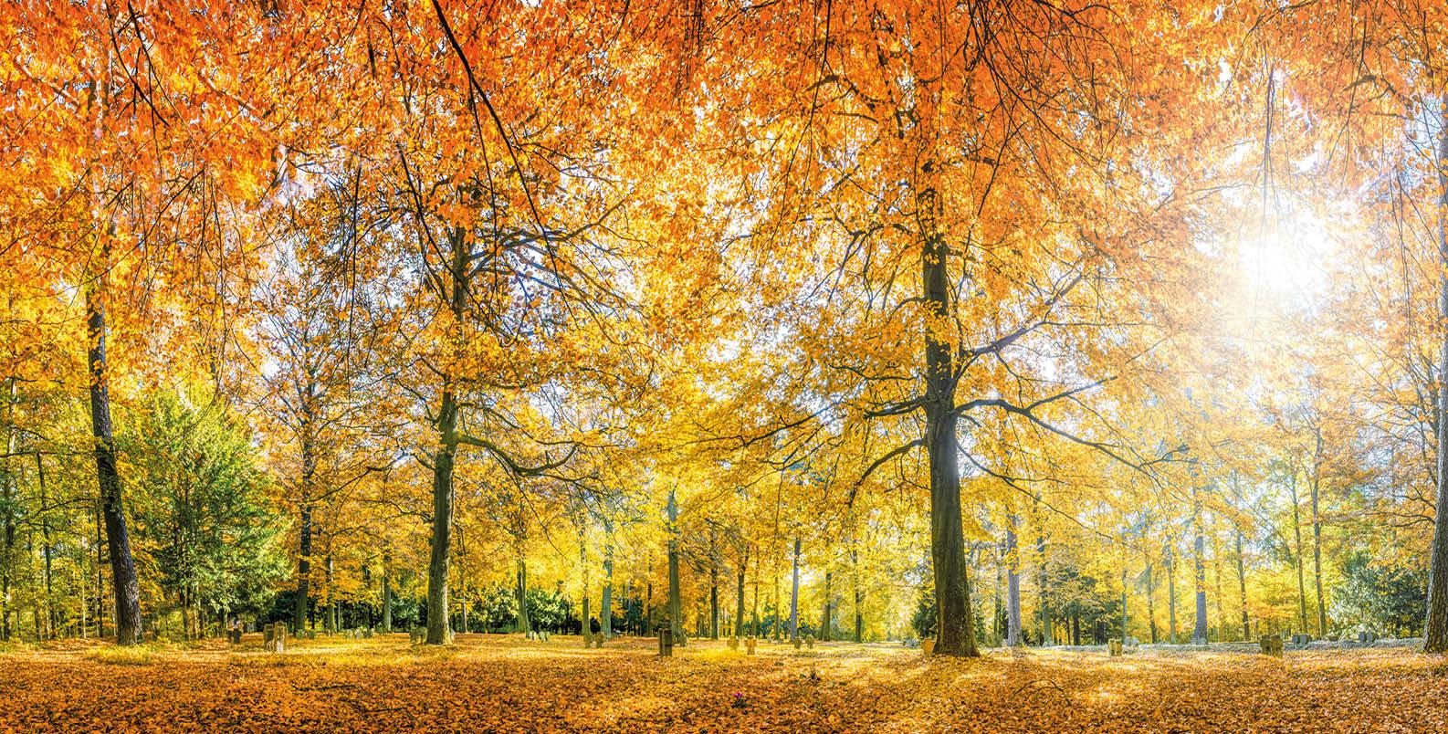 wunderschöner Mischwald mit Herbstverfärbung und durchbrechender Sonne. Das Bild erzeigt ein gutes Gefühl.